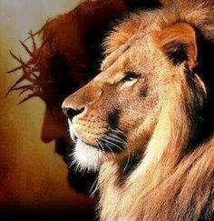 Trendy tattoo lion and lamb jesus christ Ideas Beautiful Creatures, Animals Beautiful, Cute Animals, Lion Of Judah Jesus, Lion And Lamb, Saint Esprit, Le Roi Lion, Jesus Pictures, Lynx
