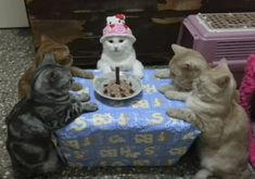 Thanks for coming to my birthday party guys means a lot . Cute Baby Cats, Cute Little Animals, Cute Funny Animals, Funny Cats, Chesire Cat, Scared Cat, Crush Memes, Cat Aesthetic, Cat Birthday