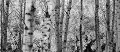 Title  Into The Forest  Artist  Guido Montanes Castillo  Medium  Photograph