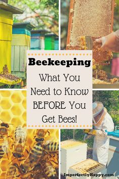 Beekeeping What to Consider Before You Get Bees Beekeeping – what you need to know BEFORE you get bees for you homestead or backyard farm.