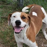 Panama City Fl Hound Unknown Type Meet Rosie A Pet For