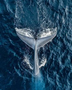 Dank an Jedes Mal, wenn ich einen Blauwal sehe, bin ich … – Indispensable address of art Thanks to Every time I see a blue whale, I am … Animal Photography, Nature Photography, Travel Photography, Summer Photography, Ocean Wallpaper, Wallpaper Awesome, Tropical Wallpaper, Summer Wallpaper, Wallpaper Desktop