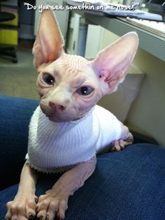 Admin's Soup of the Day! 10.23.14 http://sphynxlair.com/community/threads/admins-soup-of-the-day-10-23-14.29262/ #sphynx #sphynxcat #sphynxlair