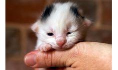 Encontrou um filhote de gato abandonado? Saiba como cuidar de gatinhos recém-nascidos - Bichos - R7