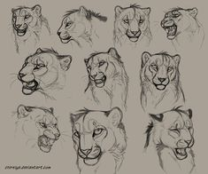 lion face anatomy - Buscar con Google