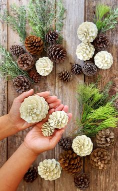 "Make beautiful ""bleached pinecones"" in 5 minutes without bleach! Non-toxic & easy DIY craft, perfect for fall, winter, Thanksgiving & Christmas decorations! for christmas table easy diy Easiest 5 Minute 'Bleached Pinecones' {without Bleach! Easy Christmas Decorations, Pine Cone Decorations, Christmas Diy, Christmas Wreaths, Pinecone Christmas Crafts, Decorating With Pine Cones, Rustic Christmas, Christmas Pine Cones, Table Centerpieces For Christmas"