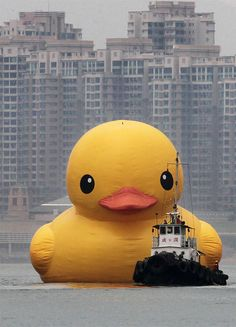 The world's largest rubber duck—a conceptual artwork by Florentijn Hofman—has just arrived in Hong Kong. More on Colossal: http://www.thisiscolossal.com/2013/05/the-worlds-largest-duck-arrives-in-hong-kong