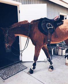BN English Clip Bridle Black  Pony