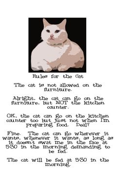 Note Card Cat Rules Cat Wins Again by Pegalee