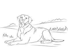 A beautiful vector illustration of a labrador retriever dog - stock ...