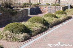 rabaty prostokątne w nowoczesnym ogrodzie - Szukaj w Google