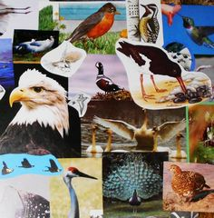 60 Vintage BIRD Pictures, Collage Kit Cut Pack, Paper Ephemera Decoupage Images Junk Journal Kit, Wallpaper Mural, Scrapbooking Lot, BIRDS by Dare2beUNIQUE on Etsy Make Your Own Collage, Diy Wallpaper, Bird Pictures, Vintage Birds, Ephemera, Wall Murals, Decoupage, Card Making, Scrapbooking