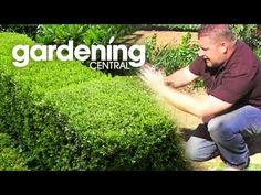 10 Fast Growing Hedges For Privacy - Gardeners' Guide Cottage Garden Design, Backyard Garden Design, Small Backyard Landscaping, Lawn And Garden, Backyard Drainage, Privacy Hedges Fast Growing, Fast Growing Hedge Plants, Best Trees For Privacy, Privacy Trees