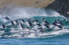 Las ballenas y delfines sienten placer y emiten pequeños gritos de felicidad