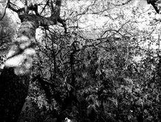 #blackandwhitephotography satuylavaara - Twitter-haku / Twitter Black And White Photography, Conversation, Twitter, Artwork, Outdoor, Black White Photography, Outdoors, Work Of Art, Auguste Rodin Artwork