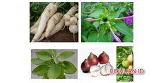 13 Obat Bisul Alami Cepat Sembuh untuk Mengobati Bisul Paling Mujarab - Lihat selengkapnya http://bidhuan.id/obat/44230/13-obat-bisul-alami-cepat-sembuh-untuk-mengobati-bisul-paling-mujarab/
