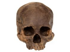 Cannibal Confections chocolate skull, $300.   Get ready for an archeological dig with this life-size skull. But don't worry about being called a cannibal – this skull is handcrafted from 100-percent imported Belgian chocolate, sure to make a killing on your buffet table.