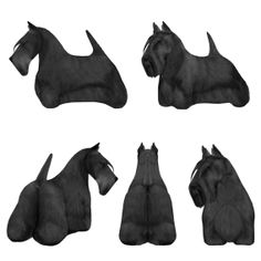 Scottish Terrier - Groomers Reference