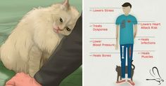 os gatos e o seu ronronar dão aos donos mais do que apenas um apoio emocional. O gato pode até contribuir para a saúde física.