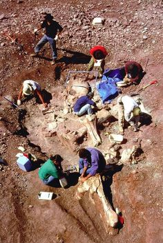 """These astounding photos are from a recent archaeological discovery in Greece . This totally unexpected find furnishes proof of the existence of """"Nephilim"""". Nephilim is the word used to describe the giants spoken of in biblical times by Enoch as well as the giant David fought against (Goliath). It is generally believed that most of these Giants came about when the fallen angels had union with earthly woman. Note the incredible size of the skull."""