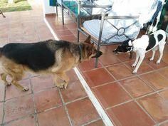 Ratos en casa Dea, Benita, Brenda y Chico 12/16