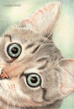びっくり! I Love Cats, Cute Cats, Cat Sketch, All About Cats, Cat Drawing, Dog Art, Art Oil, A3, Colored Pencils