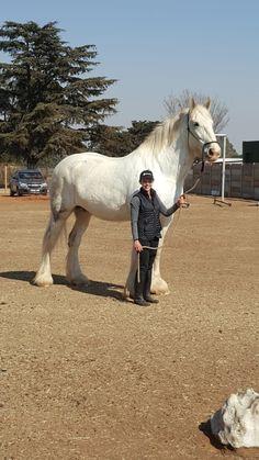 Cute Horses, Pretty Horses, Beautiful Horses, Animals Beautiful, Shire Horse, Horse Barns, Horse Information, Horse Feed, Pet Peeves