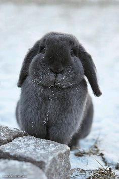 Gray bunny-in-the-snow!