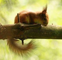 Funny squirrels16 Funny squirrels