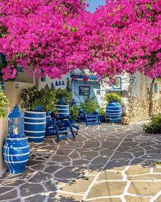 Paros Greece, Santorini Greece, Mykonos, Beautiful Gardens, Beautiful Flowers, Beautiful Places, Bougainvillea, Greek Garden, Greek Decor