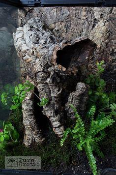 Terrarium Poecilotheria subfusca
