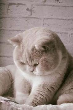 Wonderful fluffy faced cat