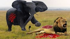 Lion vs Elephant Deadliest Amazing Fight | Lion vs Elephant Who Is The King