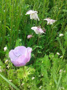 Toevalstreffers: over al het moois dat in de tuin gebeurt zonder dat jij het gepland hebt en hoe je ervoor kunt zorgen dat  er toevalstreffers in je tuin plaatsvinden. Rosarosatuinen.wordpress.com