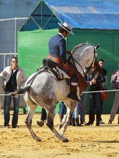 Doma Vaquera Work Horses, Black Horses, Horses And Dogs, Pretty Horses, Horse Love, Beautiful Horses, Andalusian Horse, Friesian Horse, Arabian Horses