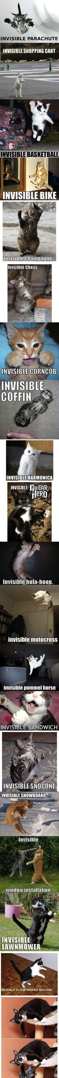 Invisible Cats - via ePinner http://amzn.to/HeQlfW