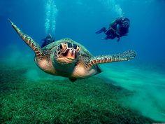 Sheikh Coast Diving and Kiting Center Domina Coral Bay Sharm el Sheikh. Diving School, Diving Helmet, Diy Simple, Reef Shark, Oceans Of The World, Underwater World, Ocean Life, Fiji, Dominatrix