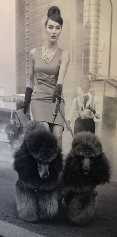 Vinyage Italian poodles