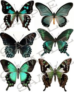 Schmetterling Collage Blatt 4 b Jpeg Blatt