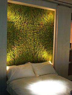 graffiti moss in the bedroom
