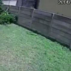 Burglar Caught By A Killer Dog