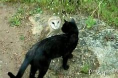 4. The Owl and the Cat