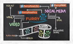 #ImStreamingWhy .. well to make #FurryPaw go viral of course! #FurryPawPics…