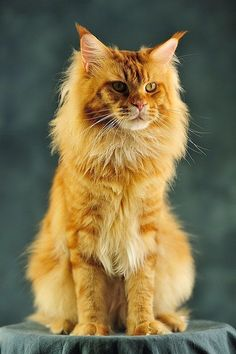 Top 5 Beautiful Cats ever
