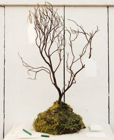 How to Make a Well Wishes Tree