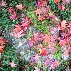 【koyadiy】さんのInstagramをピンしています。 《おはようございます。 来年2017年 ゴールデンウイークに小屋を作りませんか?詳しくはプロフィールWebサイトをご覧ください。  枯朶に烏のとまりけり秋の暮  On the withered branch  A crow has alighted - Nightfall in autumn,  #autumn #森 #間伐材 #岐阜 #杉 #ヒノキ #檜 #板倉 #伝統文化 #DIY #japan #熱海 #伊豆山 #atami #野鳥 #wabisabi #国産材 #柿渋 #タイニーハウス  #ツリーハウス  #木 #diy女子 #桜 #クロモジ #yuica #tinyhouse #japan #相模湾 #初島 #伊豆大島 #traditional》