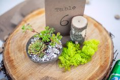 Succulents on wood slices