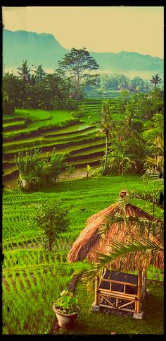MS Trip Beautiful terraced rice fields of Sidemen, Bali, Indonesia -- an example where science has become nature! Bali Lombok, Oh The Places You'll Go, Places To Travel, Places To Visit, Beautiful World, Beautiful Places, Voyage Bali, Gili Island, Rice Terraces