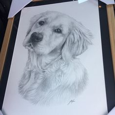 Custom portrait, baby girl or family pencil portrait drawing from a photo. Baby Girl Portraits, Pet Portraits, Pencil Portrait Drawing, Custom Pencils, Special Characters, High Resolution Photos, Family Dogs, Animal Drawings, Fur Babies