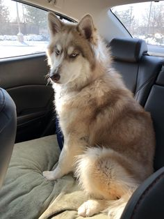 Just adopted a dog. Was told he's a malamute mix but I'm not sure I believe them. Thoughts? (imgur.com) submitted by THROWINCONDOMSATSLUT to /r/AlaskanMalamute 5 comments original view this image at imgur.com - Cute Puppies - Pitbull - German Shepard - Golden Retriever - Beagle - Bulldog - Chihuahua - English Setter - Maltese - Pug - Rottweiler - Wells Terrier - Shihtzu - Labrador - Husky - Vizsla Puppy Breeds - Pets in Clothes - Animal Training Pictures